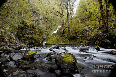 Photograph - Mountain Stream by DS Dodd