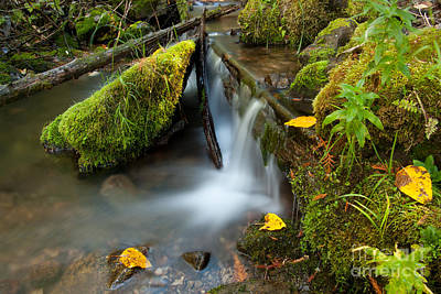 Photograph - Mountain Stream by Idaho Scenic Images Linda Lantzy