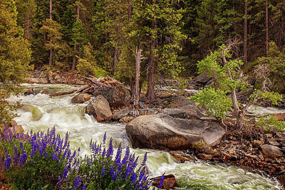 Photograph - Mountain Stream In Spring by Andrew Soundarajan