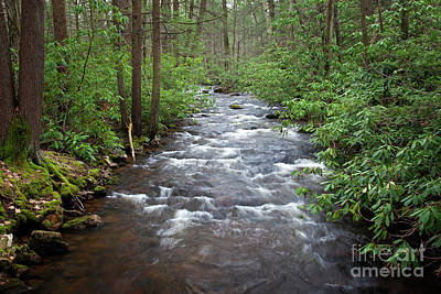 Mountain Stream Laurel Art Print by John Stephens