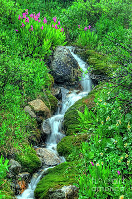 Photograph - Mountain Stream by Tony Baca