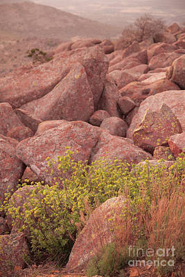 Photograph - Mountain Sunrise by Iris Greenwell