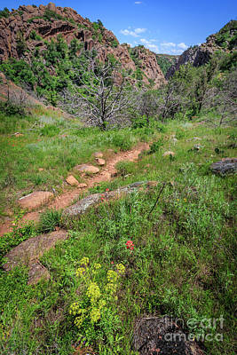 Photograph - Mountain Trail by Richard Smith