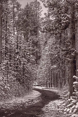 Yellowstone Photograph - Mountain Trail Yellowstone Bw by Steve Gadomski