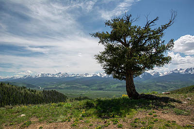 Photograph - Mountain Tree by Aaron Spong