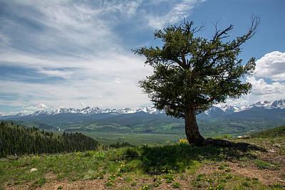 Gore Range Photograph - Mountain Tree by Aaron Spong