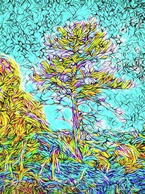 Digital Art - Mountain Tree Illumination - Boulder County Colorado by Joel Bruce Wallach