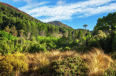 Photograph - Mountain View At Wilson Bay, Nz by Daniela Constantinescu