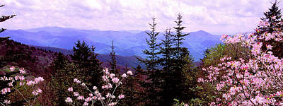 Photograph - Mountain View Thru Pink Azalea by Alan Lenk