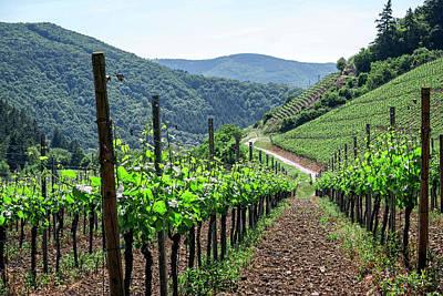 Wine Cellar Photograph - Mountain Vineyard by Daniel Hagerman