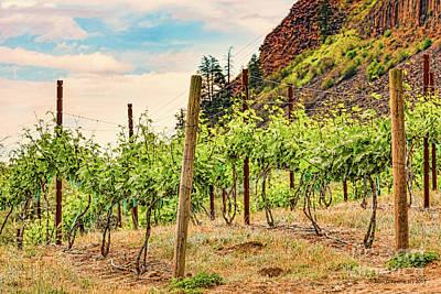 Photograph - Mountain Vineyard by Jean OKeeffe Macro Abundance Art