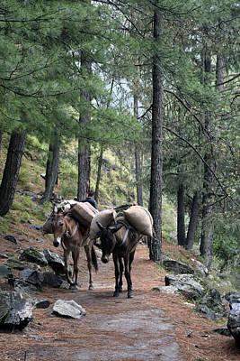 Photograph - Mountain Walk by Sumit Mehndiratta