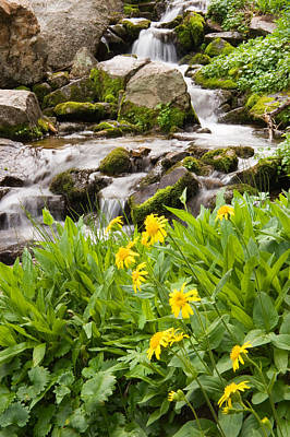 Photograph - Mountain Waterfall And Wildflowers by Utah Images