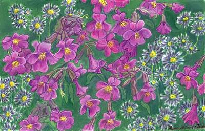 Aster Drawing - Mountain Wild Flowers by Dawn Senior-Trask