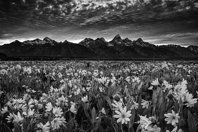 Sunrise Photograph - Mountain Wildflowers by Andrew Soundarajan