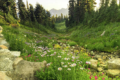 Photograph - Mountain Wildflowers by Crystal Hoeveler