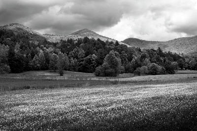 Photograph - Mountain Wildflowers In Black And White by Greg Mimbs