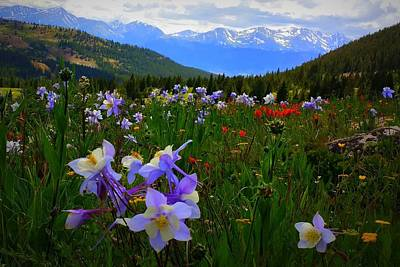 Photograph - Mountain Wildflowers by Karen Shackles