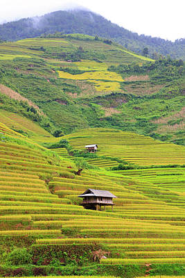 Built Structure Photograph - Mountainous Rice Field by Akari Photography