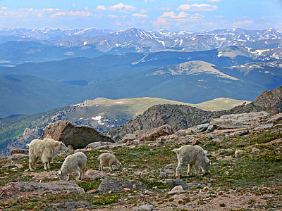 Photograph - Mountains And Goats by Diana Douglass