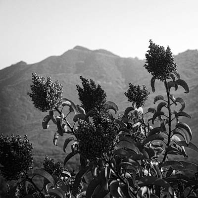 Photograph - Mountains And Vegetation by George Taylor
