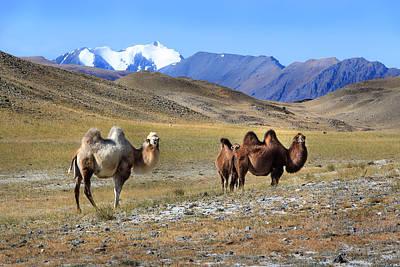 Thomas Kinkade Royalty Free Images - Mountains Calling. Kosh-Agach Altai Royalty-Free Image by Victor Kovchin