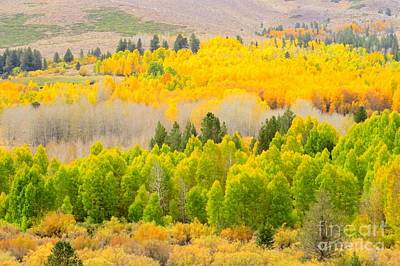 Photograph - Mountainside Aspens by Frank Townsley