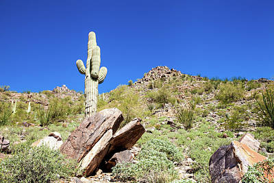 Photograph - Mountainside Cactus 2 by Ed Cilley