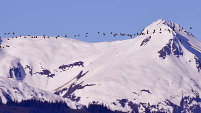 Photograph - Mountaintop Geese II by Larry Poulsen