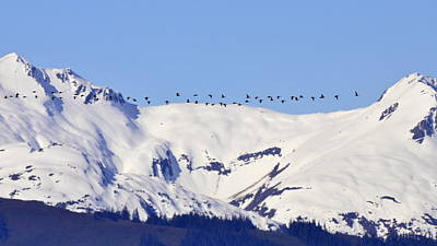 Photograph - Mountaintop Geese by Larry Poulsen