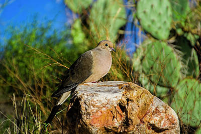 Photograph - Mourning Dove H6 by Mark Myhaver