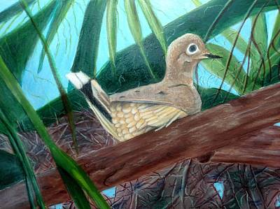Mixed Media - Mourning Dove by Joan Mansson