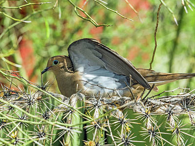 Photograph - Mourning Dove On Nest by Tam Ryan