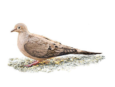 Digital Art - Mourning Dove On The Ground by Yuichi Tanabe