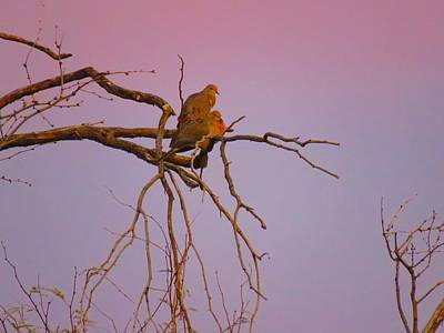 Photograph - Mourning Doves 2 by Judy Kennedy