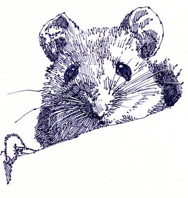 Drawing - Mouse by John D Benson