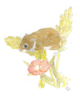 Mouse On The Corn Art Print by Jacqueline Essex