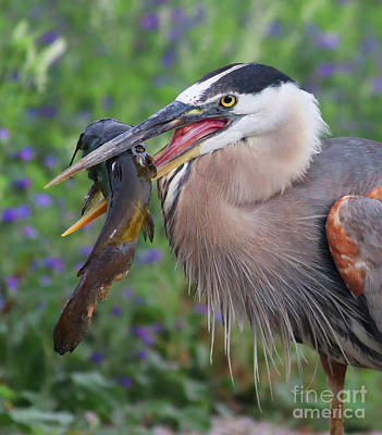 Photograph - Mouthfull by Debbie Parker