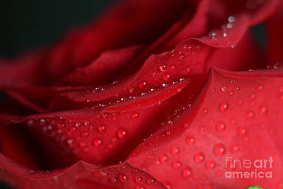 Photograph - Mouthwatering Red by Marie Neder