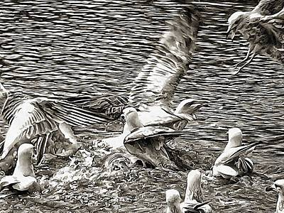 Frenzy Photograph - Movement And Chaos by Dorothy Berry-Lound
