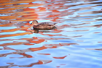 Photograph - Moving Duck On The Picturesque Water by Jenny Rainbow