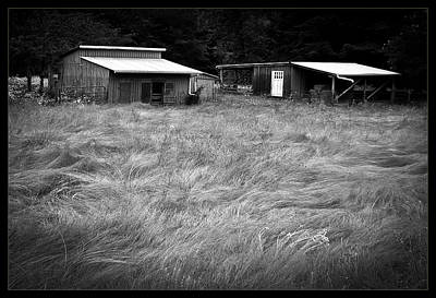 Photograph - Moving Grass by Dale Stillman