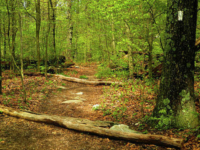 Photograph - Moving North On The Maryland Appalachian Trail by Raymond Salani III