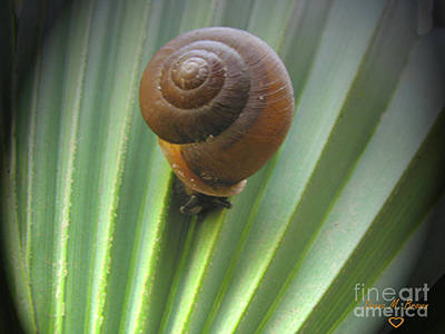 Art Print featuring the photograph Moving Slow by Donna Brown