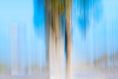 Photograph - Moving Trees 13 by Gene Norris
