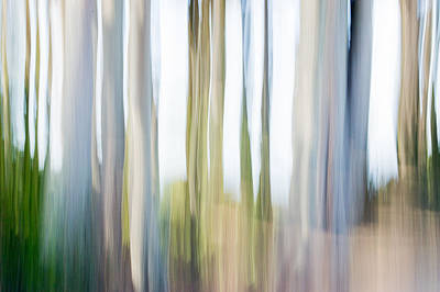 Photograph - Movng Trees 3-5 by Gene Norris