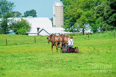 Amish Photograph - Mowing Near Shipshewana by David Arment