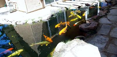Photograph - Mp Koi 2 by Phyllis Spoor