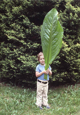 Photograph - Mpp-202 Matthew Cooper With Skunk Cabbage by Ed Cooper Photography