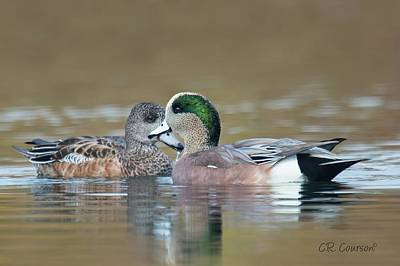 Photograph - Mr And Mrs American Wigeon by CR Courson